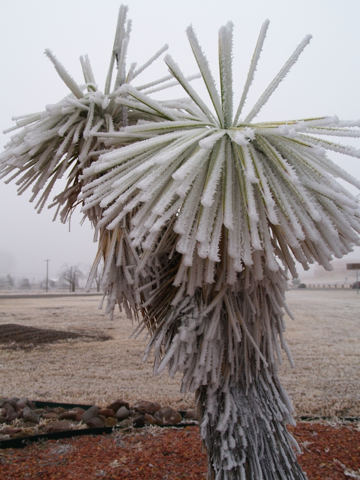 Ice covered palm